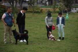 290422犬-9