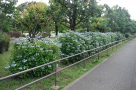 290604花-14