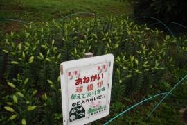 290701花-8