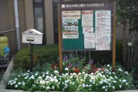291001花-4