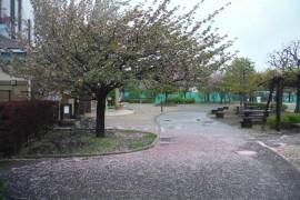 300416花-1
