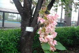 300416花-4