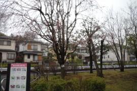 20190331花-5