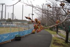 20190331花-4