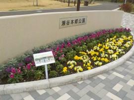 20201211花-6